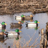 Hard Core Floating Mallard Duck Decoy
